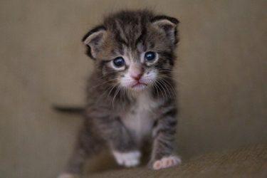 愛称はこたちゃ姫!ねおの保護猫に登場する元捨て猫がかわいすぎる